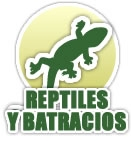 Taxidermia reptiles y batracios