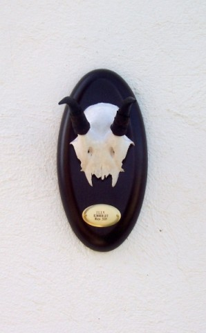 Springbok2