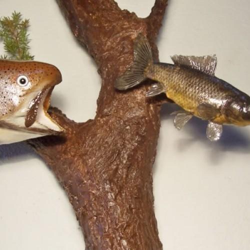 Diorama de truchas arcoiris persiguiendo una carpa